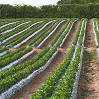 Visiting an Organic Farm