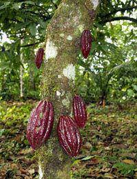 Source & Enjoy Organic Chocolate