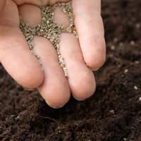 Organic Seed Swapping: Online or at Organised Events