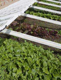 Growing Organic Herbs