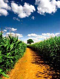On an Organic Vegetable Farm: Case Study